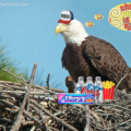 Bald Eagle Retires