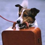 dog-with-suitcase2